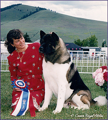 Top Winning Akita In The History of the Akita Breed -BREEDER-OWNER-HANDLED